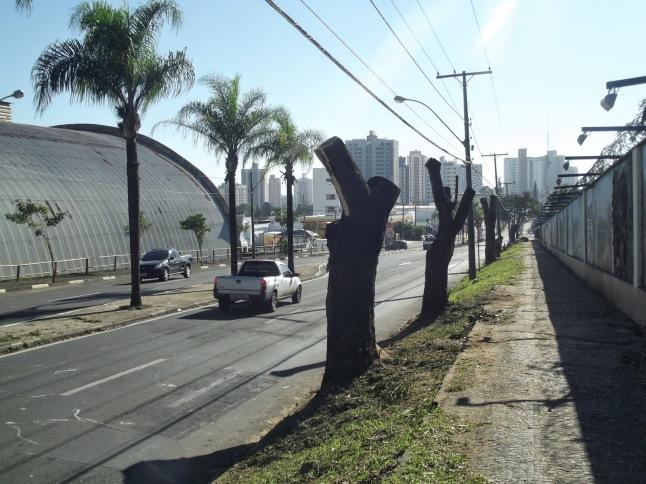 árvores cortadas piracicaba